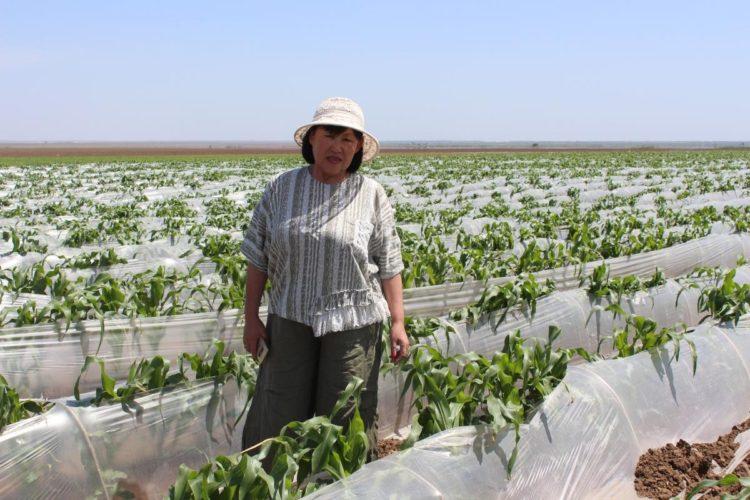 Фермер в Арзгирском районе выращивает почти 6 тысяч тонн овощей